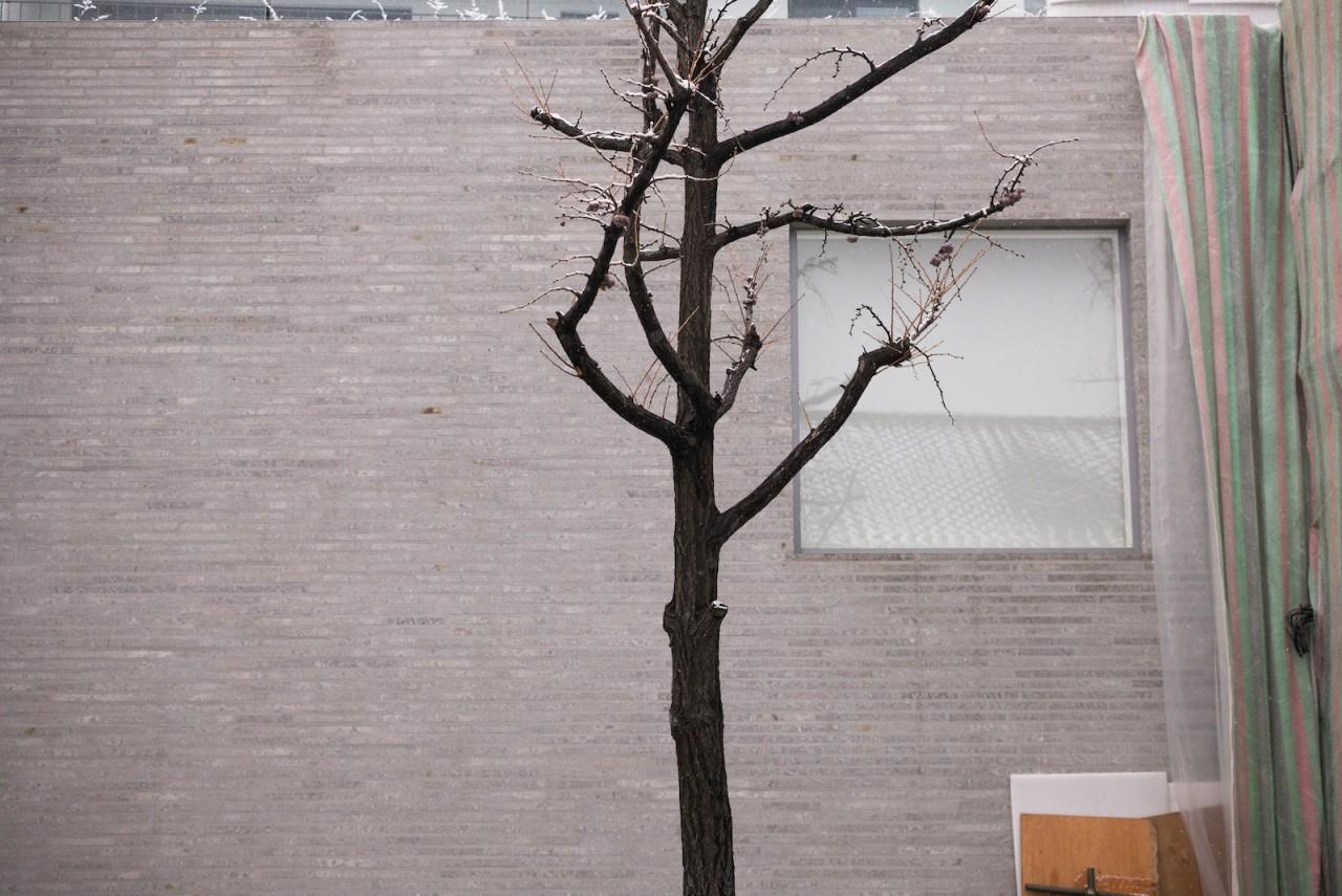 branch14