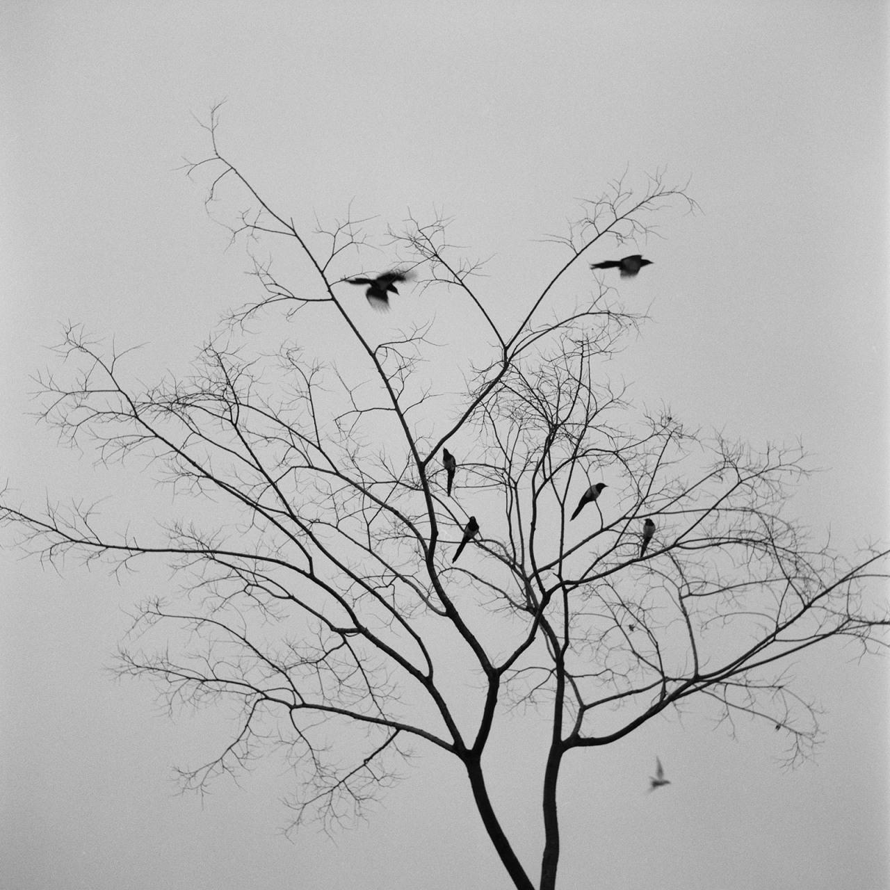 branch35