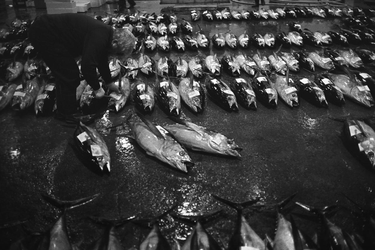 kagoshima-fish-market-22