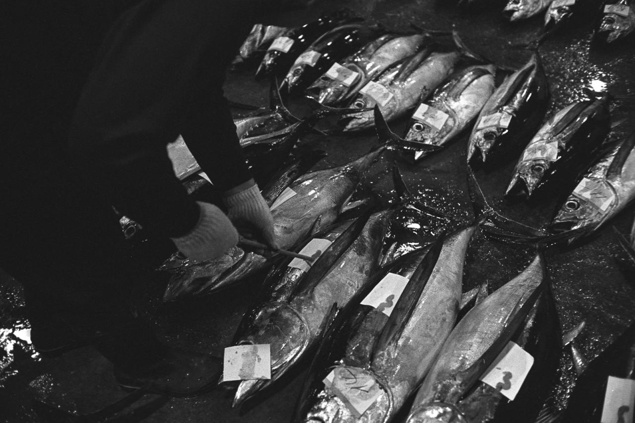 kagoshima-fish-market-23