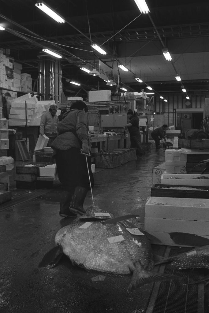 kagoshima-fish-market-4