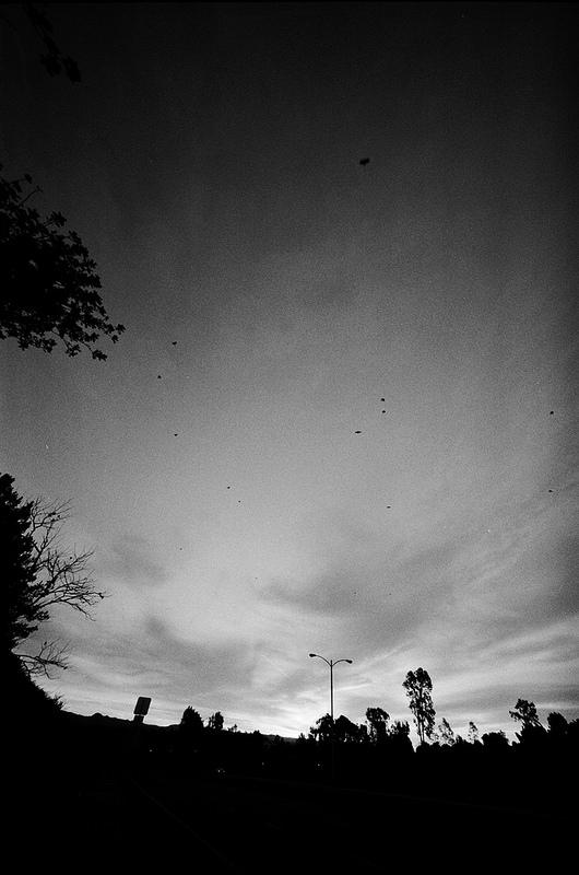 16Jan_Irvine_Birds