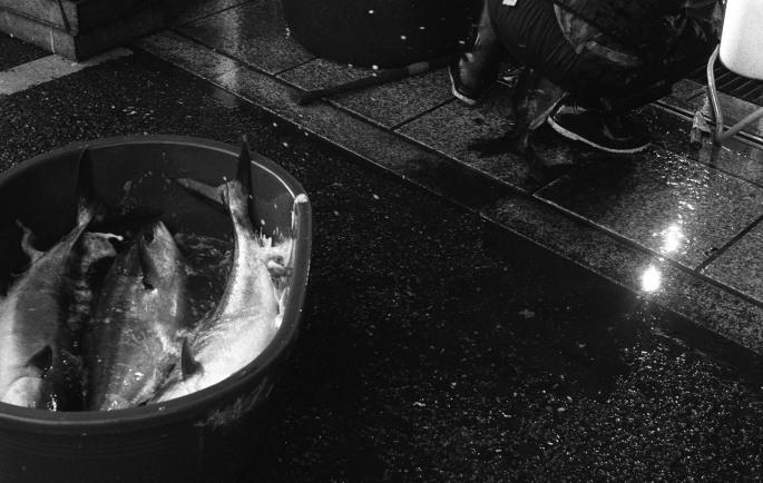 170402-1 Leica IIIa Elmar5cm HP5 07_36-1
