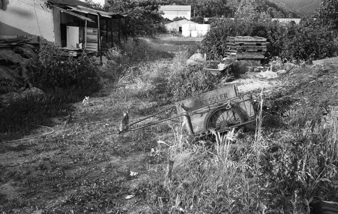 170609 LeicaM6 Jupiter12 400TX 20-1